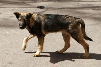 Un perrita callejera alimentó a niño abandonad en Arica