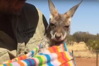 Animales Huérfanos Tienen una Segunda Oportunidad  (video)