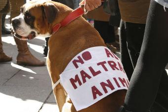 Según la PDI, los casos de maltrato animal van en aumento