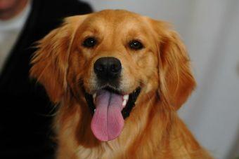 Los perros pueden confiar en alguien según sus experiencias