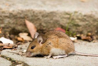 Las ratitas son lo mejor, y este video lo prueba