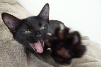 ¿Cómo le cortas las uñas a tu mascota?