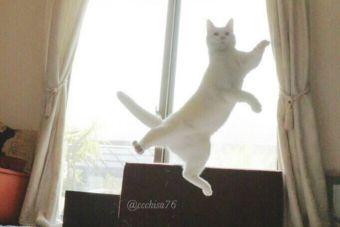Video: Conoce a Miruko, el gato bailarín