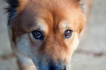 ¡Ojo! Mitos y verdades respecto a los sentidos de los perros