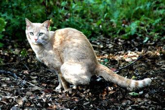 5 consejos para educar a tu gato para ir al baño
