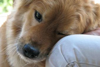 5 consejos para quienes crian un perro por primera vez