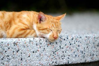 5 cualidades que tiene mi gato que mi mejor amigo no