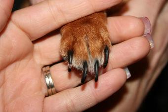 5 consejos para cortarle las uñas a mi perr@