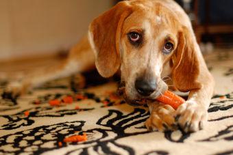 Frutas y verduras que tus perros aman (y les hacen bien)