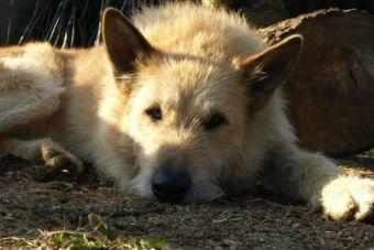 Entendiendo la misión de los rescatistas de animales