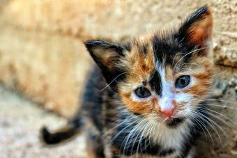 5 videos de gatitos con capacidades diferentes que te harán amar la vida