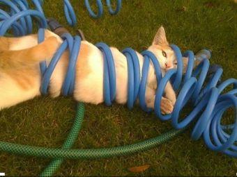 12 imágenes de gatitos atorados en lugares imposibles