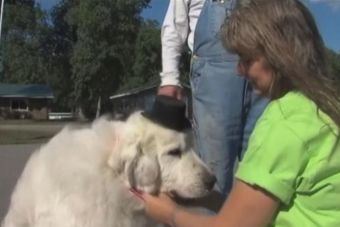 Perro es elegido alcalde en Minnesota