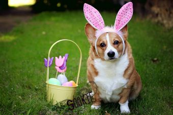 Animales Disfrazados de Conejos para Pascua de Resurrección
