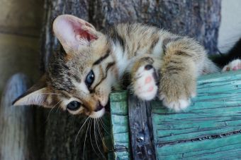 Gatos que comen todo lo que pillan... ¿A qué se debe?