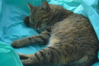 Camas para gatitos que puedes hacer tu mism@
