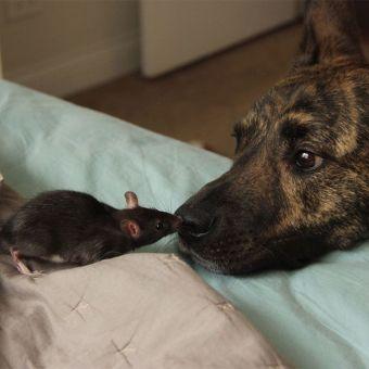 Perro y ratita rescatados no dejan de besarse