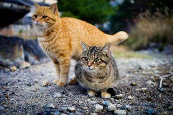 Nina y Pantera, 2 gatitos inseparables
