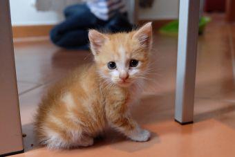 10 imágenes de gatos tiernos que no puedes dejar de ver