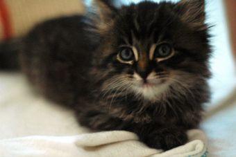 8 beneficios de tener un gato en departamento