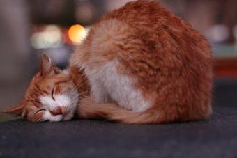 Conoce los beneficios de los ronroneos de tu gato