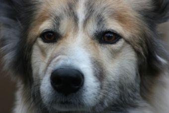 PETA afirma que mataderos chinos sacrifican hasta 200 perros diarios para uso de piel