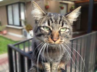 10 cosas que no sabías sobre los gatos