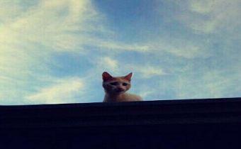 ¿Por qué los gatos se van?