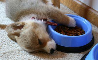 Los nutrientes que debe tener una buena comida para mascotas