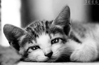 ¿Cómo saber si mi gatito tiene parásitos?