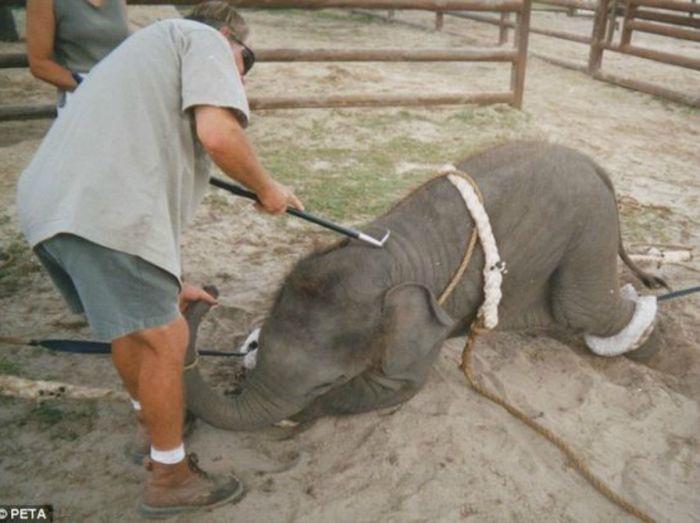 Recoleta prohíbe los animales en los circos y rodeos - Imagen 1