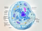 Los 15 conceptos que deberías repasar para la PSU de Ciencias