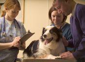 ¿Qué hace un veterinario?