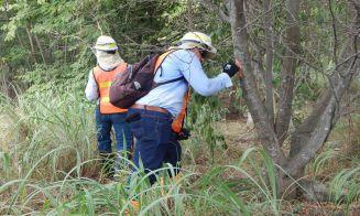 10 razones para estudiar ingeniería forestal