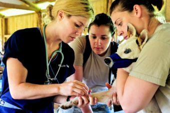 Medicina Veterinaria: ¿cuánto es la duración real por institución?