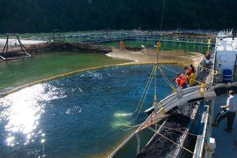 Puntajes de corte: Ingeniería en Acuicultura 2015