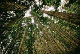 Universidad Mayor: Carrera de Ingeniería en Medio Ambiente y Sustentabilidad