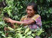 Veracruz, Chiapas y Oaxaca, rutas y paraísos del café en México