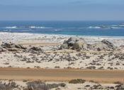 Recorriendo Chile: Parque Nacional Llanos de Challe
