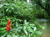 5 actividades para hacer en la selva de Ecuador