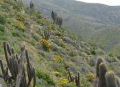 Recorriendo Chile: Parque Nacional Bosque Fray Jorge