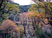 Los 7 mejores senderos de trekking en Patagonia Norte