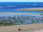 10 actividades imperdibles de Puerto Madryn, Patagonia Argentina
