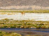 Recorriendo Chile: Parque Nacional Nevado de Tres Cruces