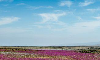 Valle del Huasco: el jardín florido de Atacama