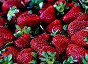 Los beneficios de comer frutillas