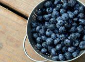 Nutrición para deportistas: Arándanos