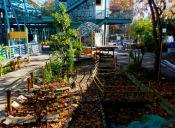 Huerto Comunitario FAU y su misión medioambiental y social