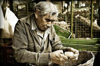 Estudio muestra que chilenos trabajan hasta los 70 a os y for Pension para universitarios