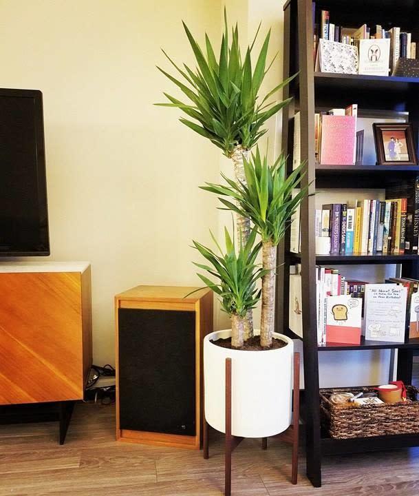 case study modern planters with walnut stand case study planters on room and board planter